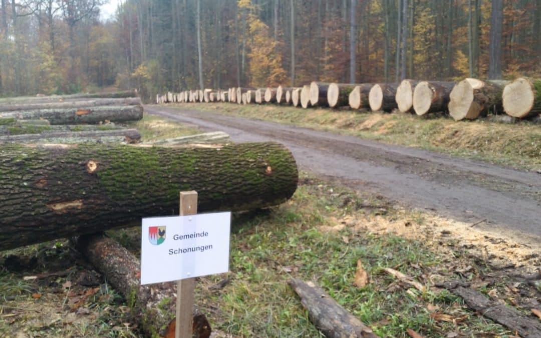 Schonunger Gemeindewald kämpft mit den Folgen des Klimawandels