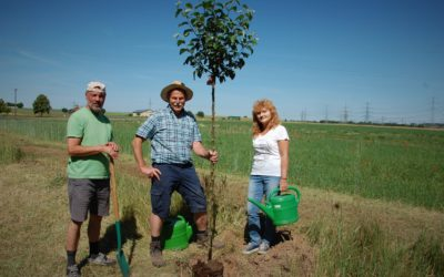 Baumpflanzung zum Tag der Umwelt – MdL Paul Knoblach (GRÜNE) mit mehreren Botschaften