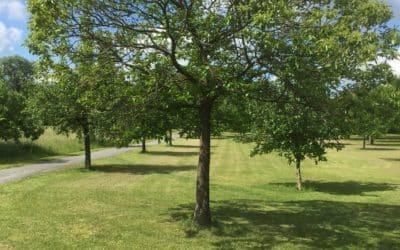 1000-Bäume-Projekt startet im Herbst